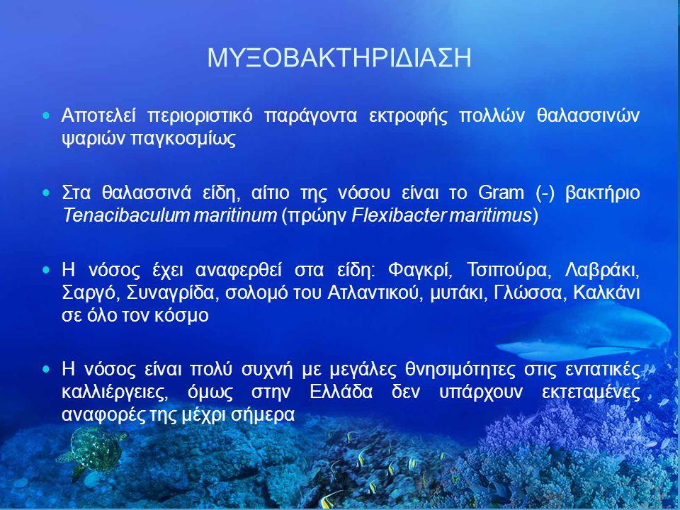 Αποτελεί περιοριστικό παράγοντα εκτροφής πολλών θαλασσινών ψαριών παγκοσμίως Στα θαλασσινά είδη, αίτιο της νόσου είναι το Gram (-) βακτήριο Tenacibaculum maritinum (πρώην Flexibacter maritimus) Η νόσος έχει αναφερθεί στα είδη: Φαγκρί, Τσιπούρα, Λαβράκι, Σαργό, Συναγρίδα, σολομό του Ατλαντικού, μυτάκι, Γλώσσα, Καλκάνι σε όλο τον κόσμο Η νόσος είναι πολύ συχνή με μεγάλες θνησιμότητες στις εντατικές καλλιέργειες, όμως στην Ελλάδα δεν υπάρχουν εκτεταμένες αναφορές της μέχρι σήμερα