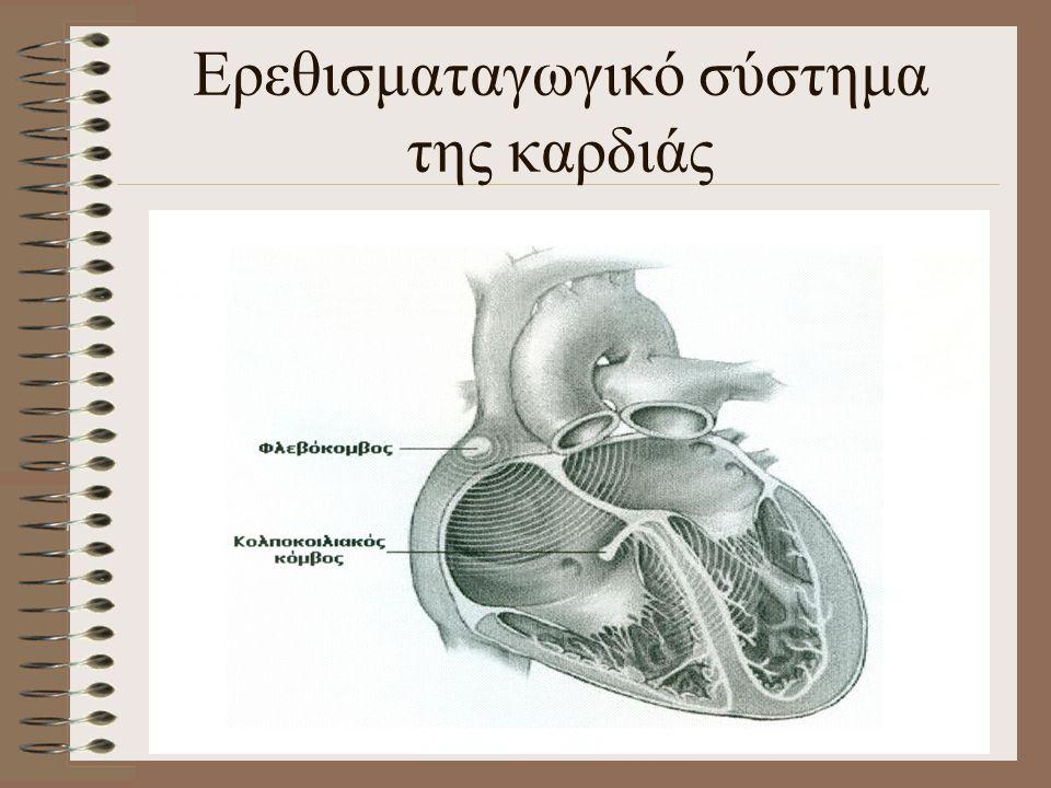 Ερεθισματαγωγικό σύστημα της καρδιάς
