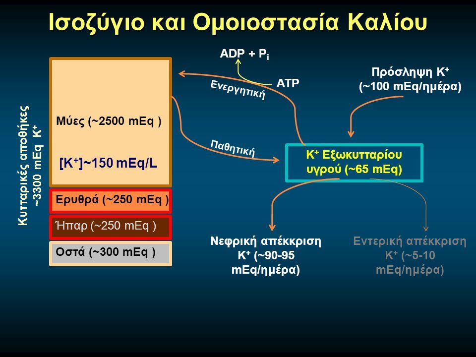 Ισοζύγιο και Ομοιοστασία Καλίου Μύες (~2500 mEq ) Ερυθρά (~250 mEq ) Ήπαρ (~250 mEq ) Οστά (~300 mEq ) Κυτταρικές αποθήκες ~3300 mEq Κ + [Κ + ]~150 mEq/L K + Εξωκυτταρίου υγρού (~65 mEq) Παθητική Ενεργητική ATP ADP + P i Πρόσληψη Κ + (~100 mEq/ημέρα) Νεφρική απέκκριση Κ + (~90-95 mEq/ημέρα) Εντερική απέκκριση Κ + (~5-10 mEq/ημέρα)