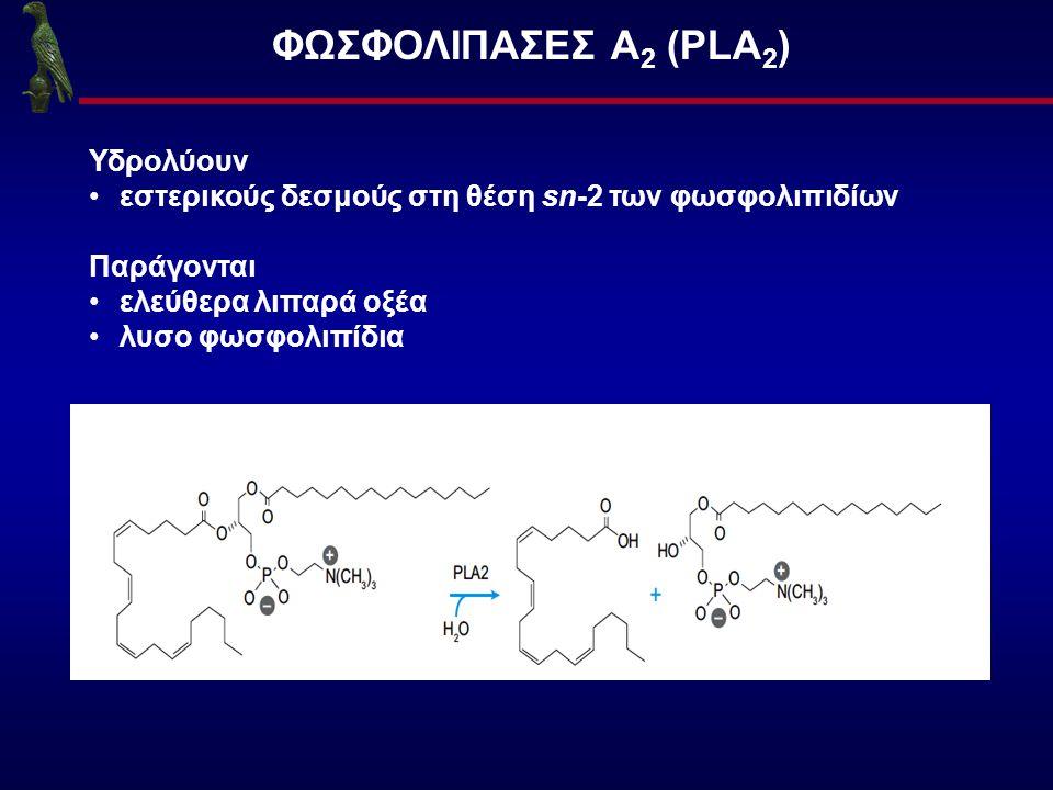ΦΩΣΦΟΛΙΠΑΣΕΣ Α 2 (PLA 2 ) Υδρολύουν εστερικούς δεσμούς στη θέση sn-2 των φωσφολιπιδίων Παράγονται ελεύθερα λιπαρά οξέα λυσο φωσφολιπίδια