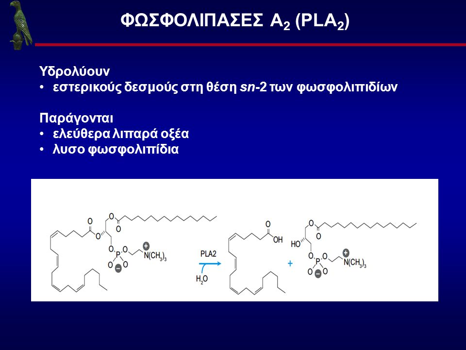 HPLC-ΦΘΟΡΙΣΜΟΜΕΤΡΙΚΗ ΜΕΘΟΔΟΣ Διαχωρισμό της C 12 -NBD-PC από το C 12 -NBD-FA Σύστημα Έκλουσης t R (min) C 12 -NBD-PCC 12 -NBD-FA Rs CH 3 OH-H 2 O (80:20, v/v) 6.6 11.54.4