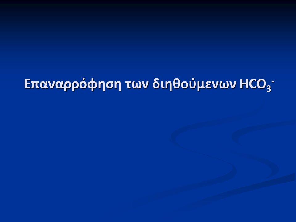 Επαναρρόφηση των διηθούμενων HCO 3 -