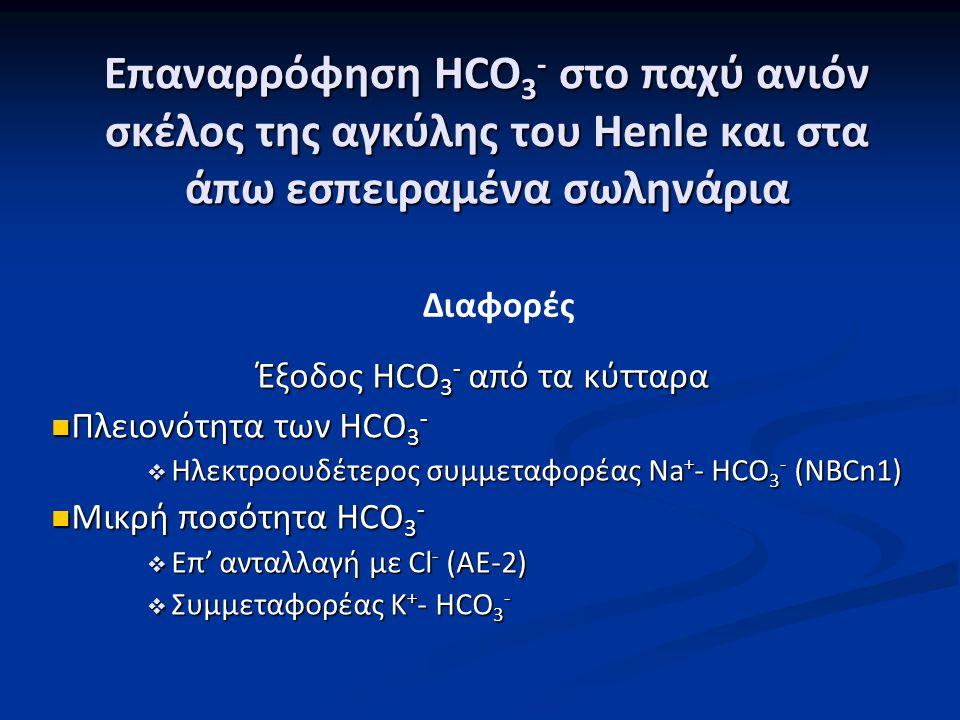 Επαναρρόφηση HCO 3 - στο παχύ ανιόν σκέλος της αγκύλης του Henle και στα άπω εσπειραμένα σωληνάρια Έξοδος HCO 3 - από τα κύτταρα Πλειονότητα των HCO 3