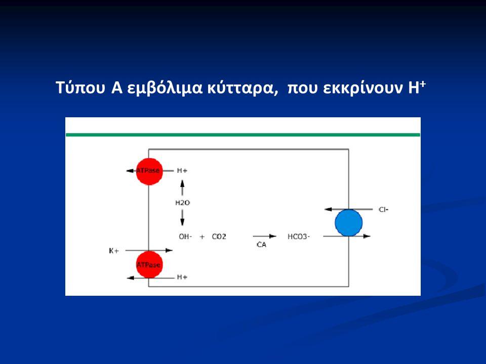 Τύπου Α εμβόλιμα κύτταρα, που εκκρίνουν H +