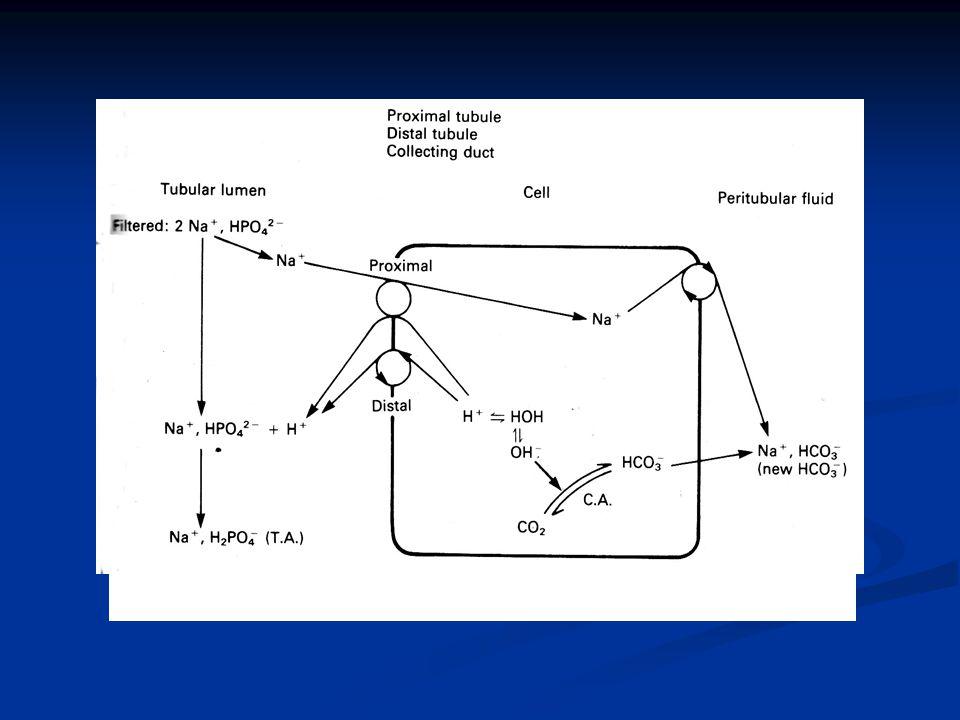 Εικόνα 9. Μηχανισμοί παραγωγής Τ.Α. και σχηματισμού «νέων» HCO - 3