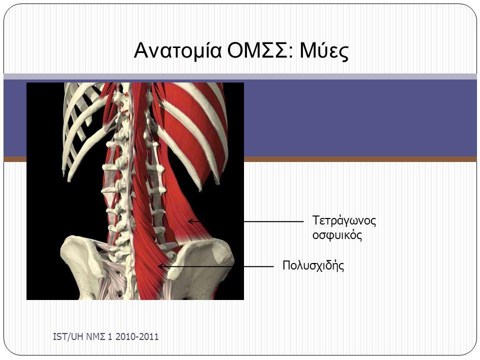 Μαθησιακά Αποτελέσματα IST/UΗ ΝΜΣ 1 2010-2011 Περιγραφή των προσφύσεων, της νεύρωσης και της λειτουργίας της θωρακοοσφυϊκής περιτονίας και των κυριοτέρων μυών της περιοχής της οσφύος: Ορθός κοιλιακός Έσω και έξω λοξός κοιλιακός Εγκάρσιος κοιλιακός Ορθωτήρας του κορμού Τετράγωνος οσφυϊκός Πολυσχιδής Περιγράψτε πώς οι μύες επηρεάζουν τη στάση και την κλίση της λεκάνης