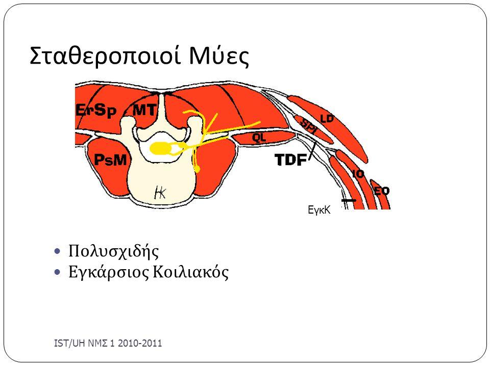 Σταθεροποιοί Μύες Πολυσχιδής Εγκάρσιος Κοιλιακός IST/UΗ ΝΜΣ 1 2010-2011 ΕγκΚ
