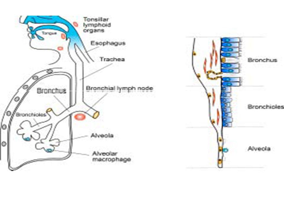 ΤΑΧΕΙΕΣ ΔΙΑΓΝΩΣΤΙΚΕΣ ΜΕΘΟΔΟΙ ΑΝΙΧΝΕΥΣΗΣ ΤΟΥ ΙΟΥ ΤΗΣ ΓΡΙΠΗΣ ΠΟΥ ΔΙΑΤΙΘΕΝΤΑΙ ΣΤΟ ΕΜΠΟΡΙΟ  Οι ταχείες διαγνωστικές μέθοδοι που διατίθενται στο εμπόριο (Rapid Tests), που χρησιμοποιούνται για την ανίχνευση ιών γρίπης τύπου Α θα μπορούσαν να ανιχνεύσουν και τον ιό της γρίπης των χοίρων, αλλά λόγω της χαμηλής ευαισθησίας τους σε σύγκριση με άλλες εργαστηριακές διαγνωστικές μεθόδους, μπορούν να δώσουν ψευδώς αρνητικά αποτελέσματα.