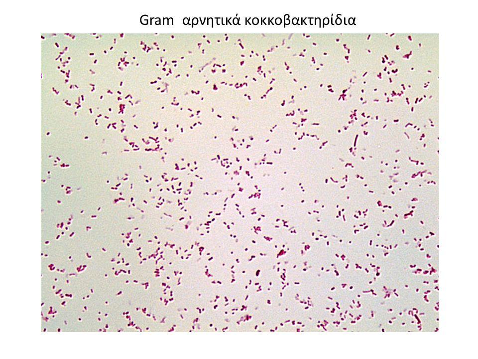 Gram αρνητικά κοκκοβακτηρίδια
