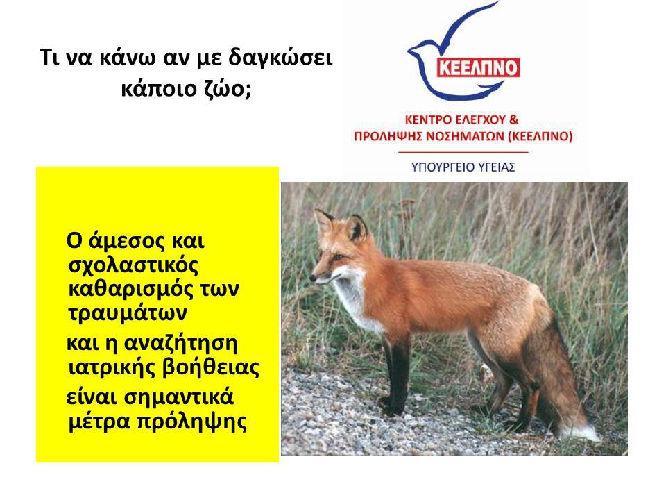 Τι να κάνω αν με δαγκώσει κάποιο ζώο; Ο άμεσος και σχολαστικός καθαρισμός των τραυμάτων και η αναζήτηση ιατρικής βοήθειας είναι σημαντικά μέτρα πρόληψ