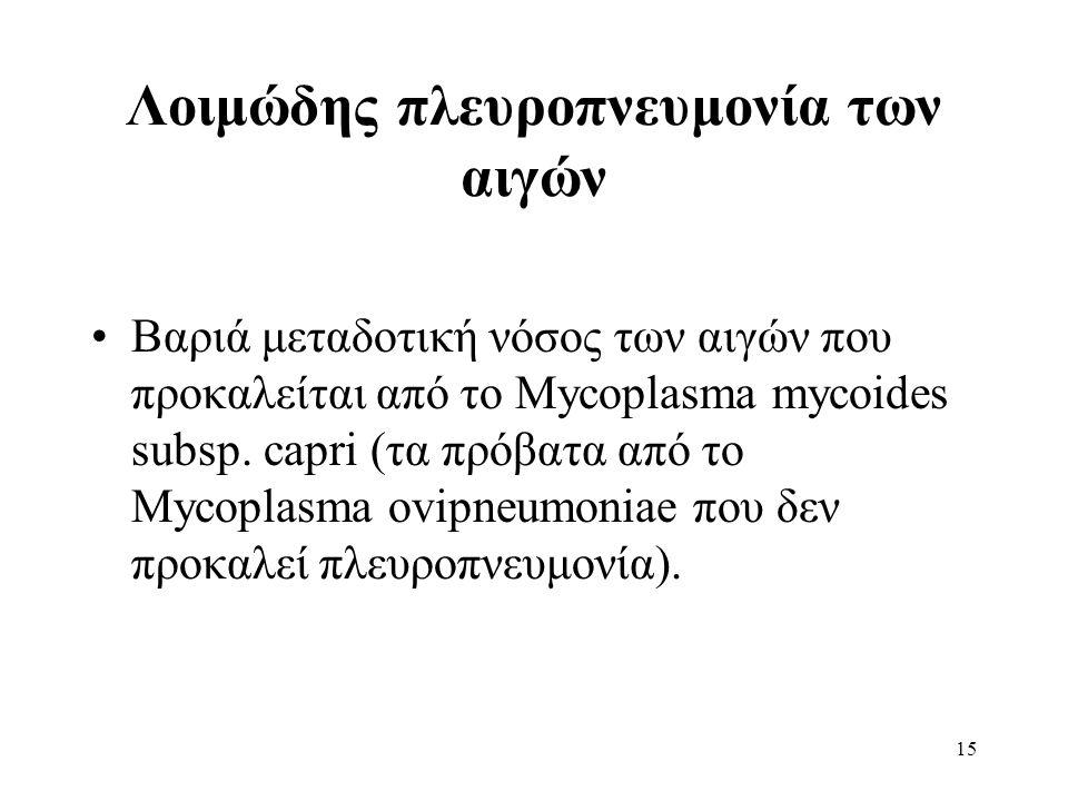 15 Λοιμώδης πλευροπνευμονία των αιγών Βαριά μεταδοτική νόσος των αιγών που προκαλείται από το Mycoplasma mycoides subsp.