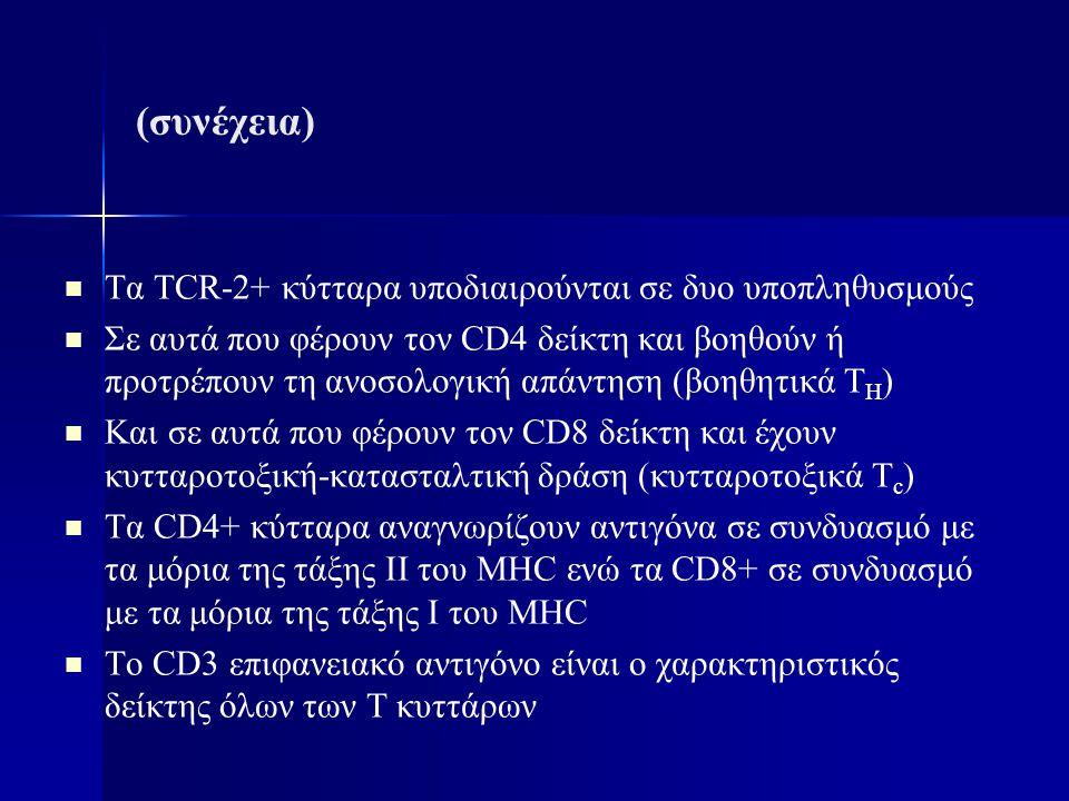(συνέχεια) Τα TCR-2+ κύτταρα υποδιαιρούνται σε δυο υποπληθυσμούς Σε αυτά που φέρουν τον CD4 δείκτη και βοηθούν ή προτρέπουν τη ανοσολογική απάντηση (β