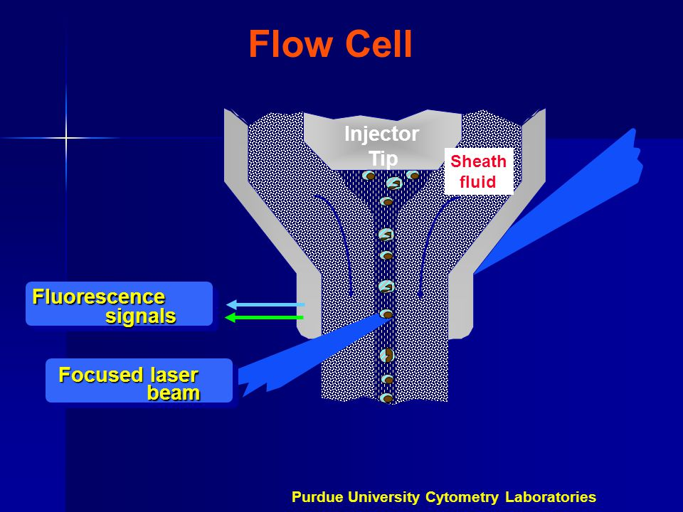 Flow Cell Injector Tip Fluorescence signals Focused laser beam Sheath fluid Purdue University Cytometry Laboratories