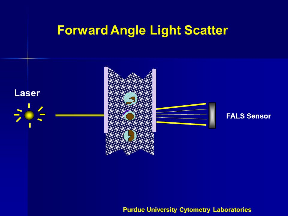 Forward Angle Light Scatter FALS Sensor Laser Purdue University Cytometry Laboratories