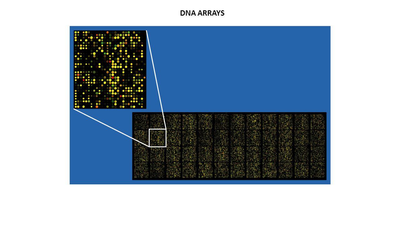 Μοριακή Μικροβιολογία  Ιός του ανθρώπινου θηλώματος (HPV)  Ιός της ηπατίτιδας Β (HBV-PCR)  Ιός της ηπατίτιδας C (HCV-PCR)  Ιός του απλού έρπητα (HSV- 1/2-PCR)  Iός έρπητα Ζωστήρα (VZV-PCR)  Ιός Εpstein-Barr (EBV-PCR)  Μεγαλοκυτταροϊός (CMV-PCR)  Ιός του έρπητα 6 (HHV-6-PCR)  Mycobacterium tuberculosis (TB-PCR)  Mycoplasma pneumoniae  Mycoplasma hominis  Ureaplsma urealyticum  Neisseria gonorrhoeae  Chlamydia trachomatis  Toxoplasma gondii ΕΥΡΩΓΕΝΕΤΙΚΗ Α.Ε.