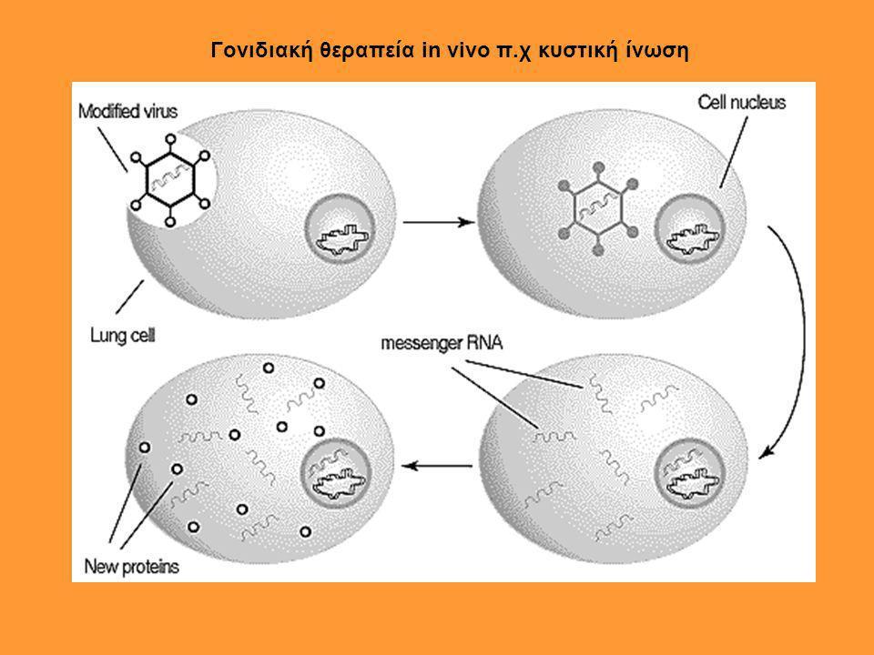 Γονιδιακή θεραπεία in vivo π.χ κυστική ίνωση