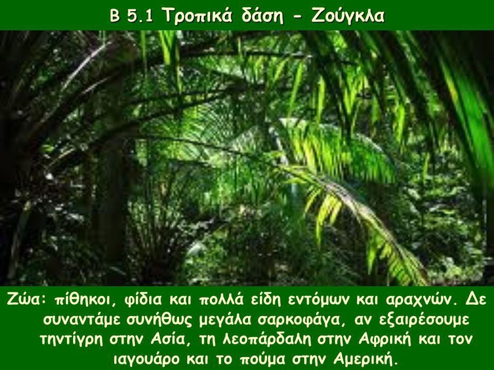 Φυτά: τα δέντρα είναι τοποθετημένα σε ορόφους, ανάλογα με την ανάγκη τους για φως. Β 5.1 Τροπικά δάση - Ζούγκλα Ζώα: πίθηκοι, φίδια και πολλά είδη εντ