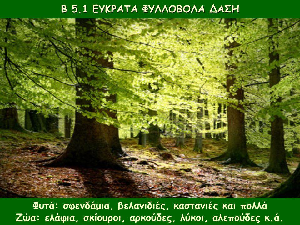 Φυτά: σφενδάμια, βελανιδιές, καστανιές και πολλά αγριολούλουδα. Β 5.1 ΕΥΚΡΑΤΑ ΦΥΛΛΟΒΟΛΑ ΔΑΣΗ Ζώα: ελάφια, σκίουροι, αρκούδες, λύκοι, αλεπούδες κ.ά.