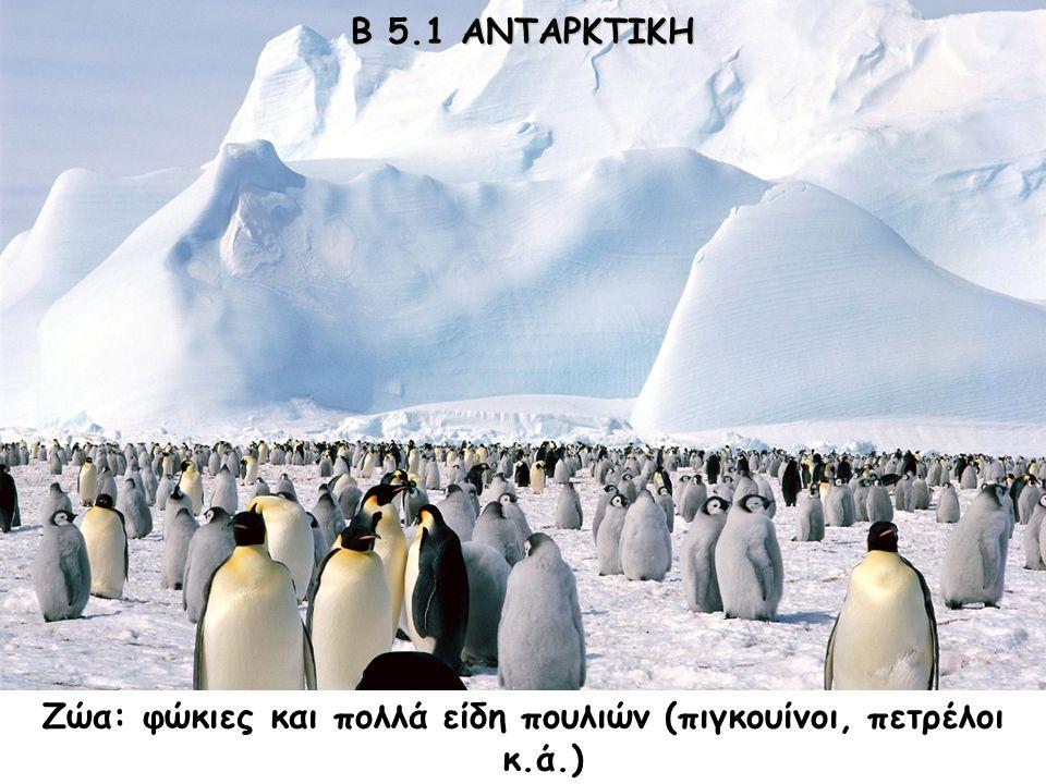 Β 5.1 ΑΝΤΑΡΚΤΙΚΗ Φυτά: δεν υπάρχει βλάστηση. Ζώα: φώκιες και πολλά είδη πουλιών (πιγκουίνοι, πετρέλοι κ.ά.)
