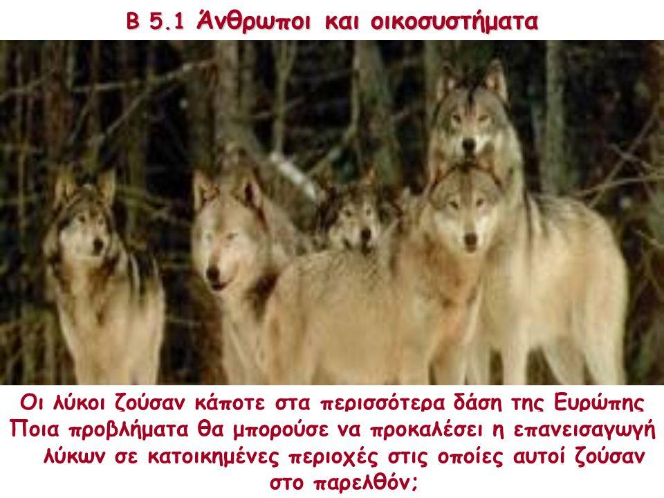 Β 5.1 Άνθρωποι και οικοσυστήματα Οι λύκοι ζούσαν κάποτε στα περισσότερα δάση της Ευρώπης και της Αμερικής. Πρόσφατα οι λύκοι έχουν επανεισαχθεί σε μερ