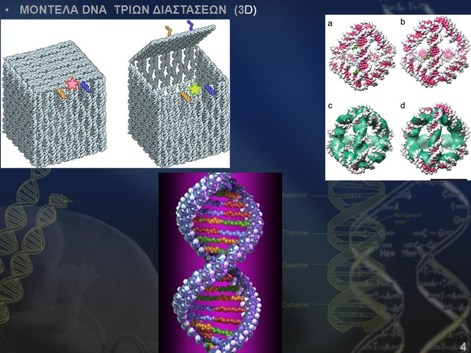 ΜΟΝΤΕΛΑ DNA ΤΡΙΩΝ ΔΙΑΣΤΑΣΕΩΝ (3D) 4