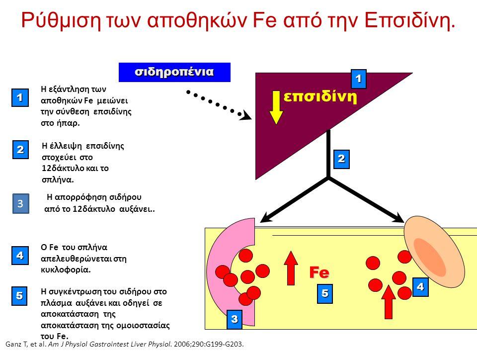 Ρύθμιση των αποθηκών Fe από την Επσιδίνη.1 H εξάντληση των αποθηκών Fe μειώνει την σύνθεση επσιδίνης στο ήπαρ. 4 Ο Fe του σπλήνα απελευθερώνεται στη κ