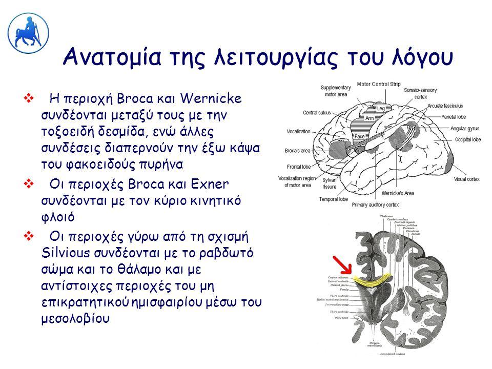Ανατομία της λειτουργίας του λόγου  Η περιοχή Broca και Wernicke συνδέονται μεταξύ τους με την τοξοειδή δεσμίδα, ενώ άλλες συνδέσεις διαπερνούν την έ