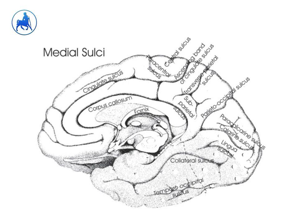 Αισθητηριακή αφασία Wernicke ΙΙ  Εκπομπή λόγου: ρέουσα (fluent), ασυνάρτητη, λογόρροια, αλφαβητικές και λεκτικές παραφασίες, νεολογισμοί  Αντίληψη: διαταραγμένη  Επανάληψη: διαταραγμένη  Κατονομασία: διαταραγμένη, παραφασίες  Ανάγνωση: διαταραγμένη  Γραφή: διαταραγμένη, ανούσιες λέξεις, διάσπαρτες σωστές λέξεις, η αντιγραφή αργή και κοπιώδης