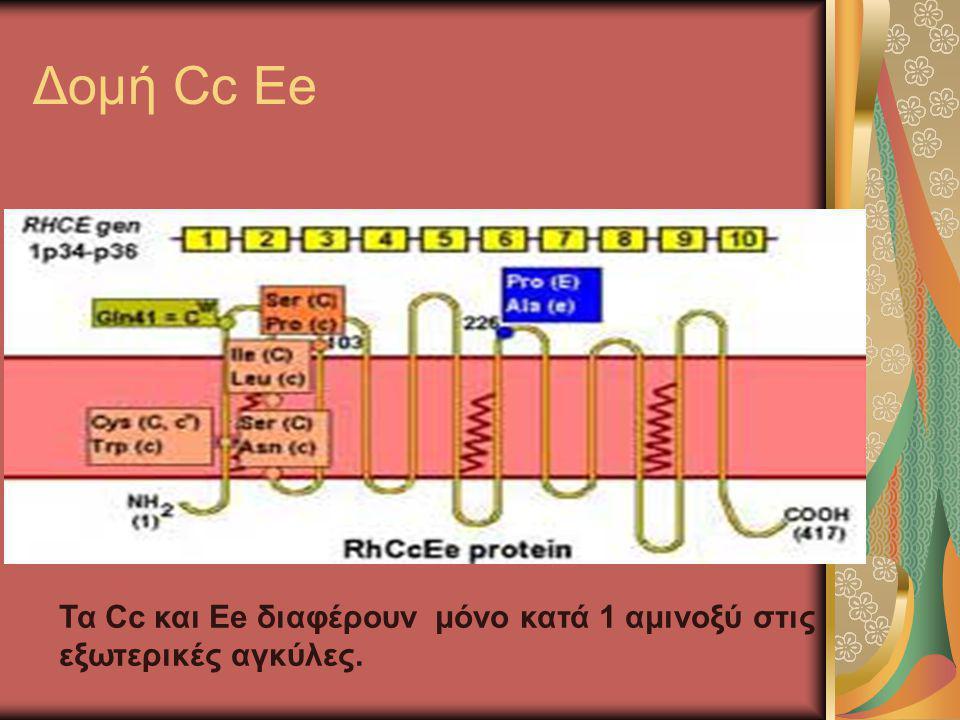 Δομή Cc Ee Τα Cc και Ee διαφέρουν μόνο κατά 1 αμινοξύ στις εξωτερικές αγκύλες.
