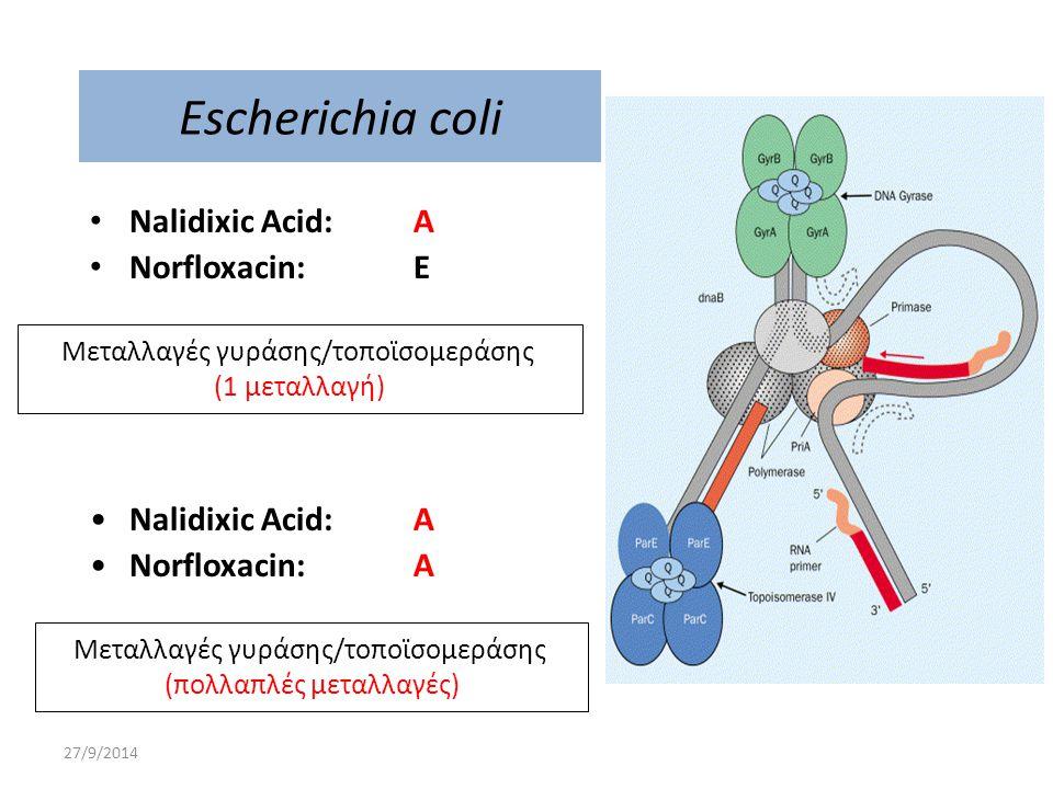 27/9/2014 Escherichia coli Nalidixic Acid: A Norfloxacin: E Μεταλλαγές γυράσης/τοποϊσομεράσης (1 μεταλλαγή) Nalidixic Acid: A Norfloxacin: A Μεταλλαγέ