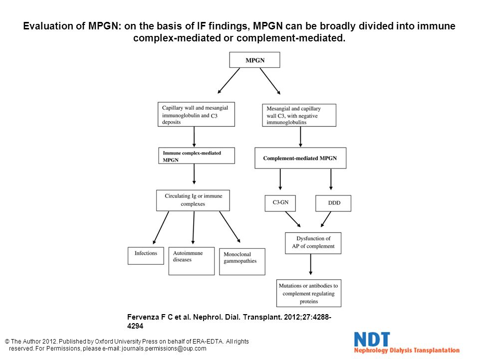 Evaluation of MPGN: on the basis of IF findings, MPGN can be broadly divided into immune complex-mediated or complement-mediated. Fervenza F C et al.