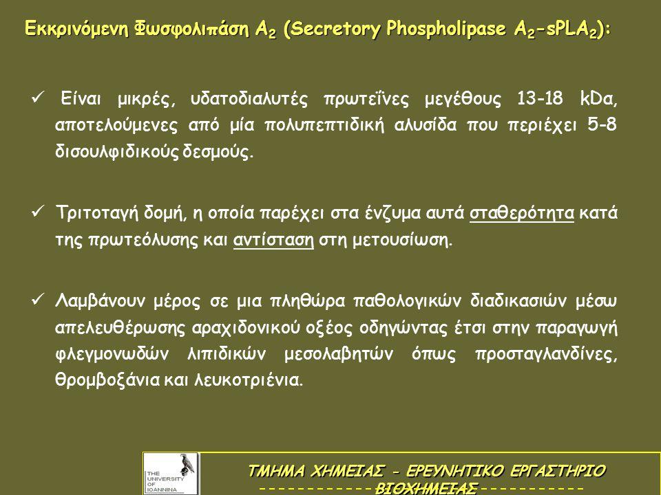 Εκκρινόμενη Φωσφολιπάση Α 2 (Secretory Phospholipase A 2 -sPLA 2 ): Είναι μικρές, υδατοδιαλυτές πρωτεΐνες μεγέθους 13-18 kDα, αποτελούμενες από μία πολυπεπτιδική αλυσίδα που περιέχει 5-8 δισουλφιδικούς δεσμούς.