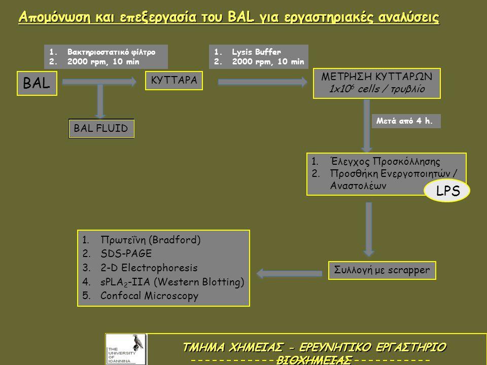 Απομόνωση και επεξεργασία του BAL για εργαστηριακές αναλύσεις ΚΥΤΤΑΡΑ 1.Βακτηριοστατικό φίλτρο 2.2000 rpm, 10 min BAL ΜΕΤΡΗΣΗ ΚΥΤΤΑΡΩΝ 1x10 6 cells / τρυβλίο 1.Lysis Buffer 2.2000 rpm, 10 min BAL FLUID 1.Έλεγχος Προσκόλλησης 2.Προσθήκη Ενεργοποιητών / Αναστολέων Μετά από 4 h.