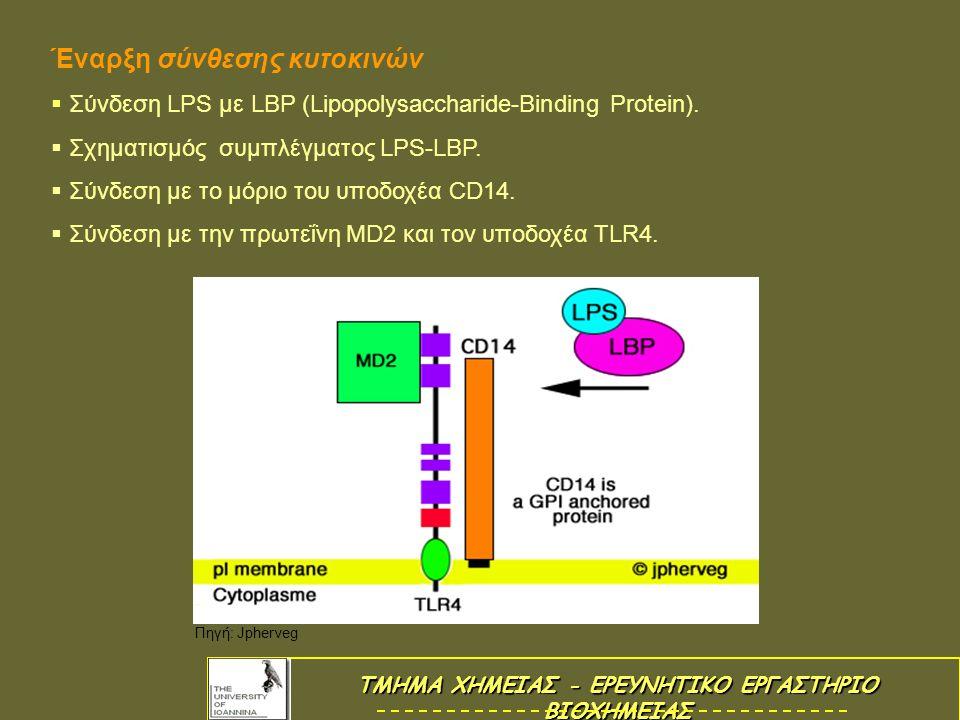 Βιοσύνθεση TNF (Tumor Necrosis Factor)  Βιοσύνθεση TNF (Tumor Necrosis Factor) Αρχίζει η σύνθεση του TNF από την μεταγραφή του γονιδίου TNF και από τη μετάφραση του TNFmRNA.