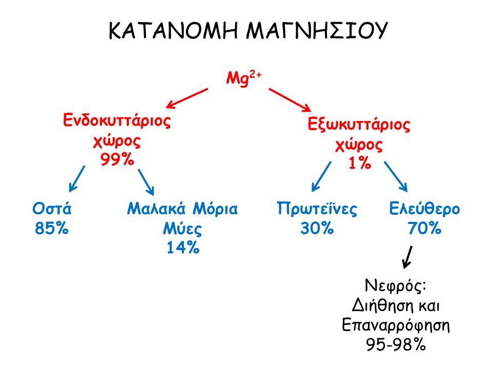 ΚΑΤΑΝΟΜΗ ΜΑΓΝΗΣΙΟΥ Mg 2+ Ενδοκυττάριος χώρος 99% Εξωκυττάριος χώρος 1% Οστά 85% Μαλακά Μόρια Μύες 14% Πρωτεΐνες 30% Ελεύθερο 70% Νεφρός: Διήθηση και Επαναρρόφηση 95-98%