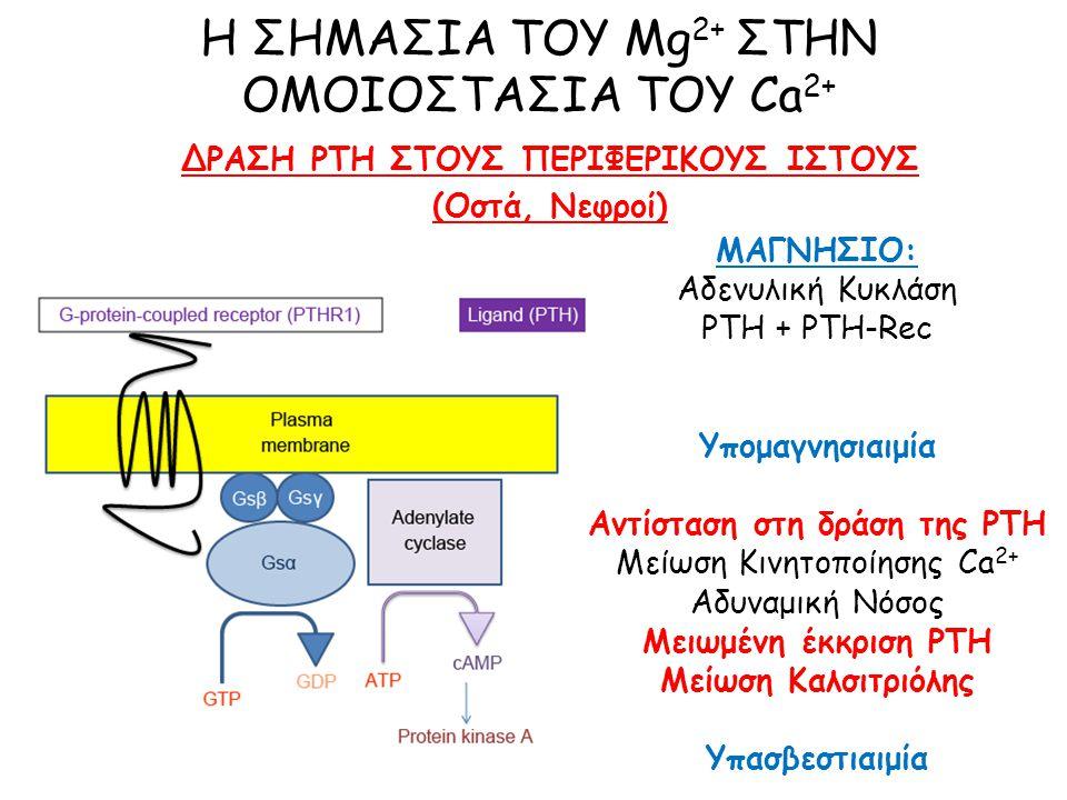 Η ΣΗΜΑΣΙΑ ΤΟΥ Mg 2+ ΣΤΗΝ ΟΜΟΙΟΣΤΑΣΙΑ ΤΟΥ Ca 2+ ΔΡΑΣΗ PTH ΣΤΟΥΣ ΠΕΡΙΦΕΡΙΚΟΥΣ ΙΣΤΟΥΣ (Οστά, Νεφροί) ΜΑΓΝΗΣΙΟ: Αδενυλική Κυκλάση PTH + PTH-Rec Υπομαγνησιαιμία Αντίσταση στη δράση της PTH Μείωση Κινητοποίησης Ca 2+ Αδυναμική Νόσος Μειωμένη έκκριση PTH Μείωση Καλσιτριόλης Υπασβεστιαιμία