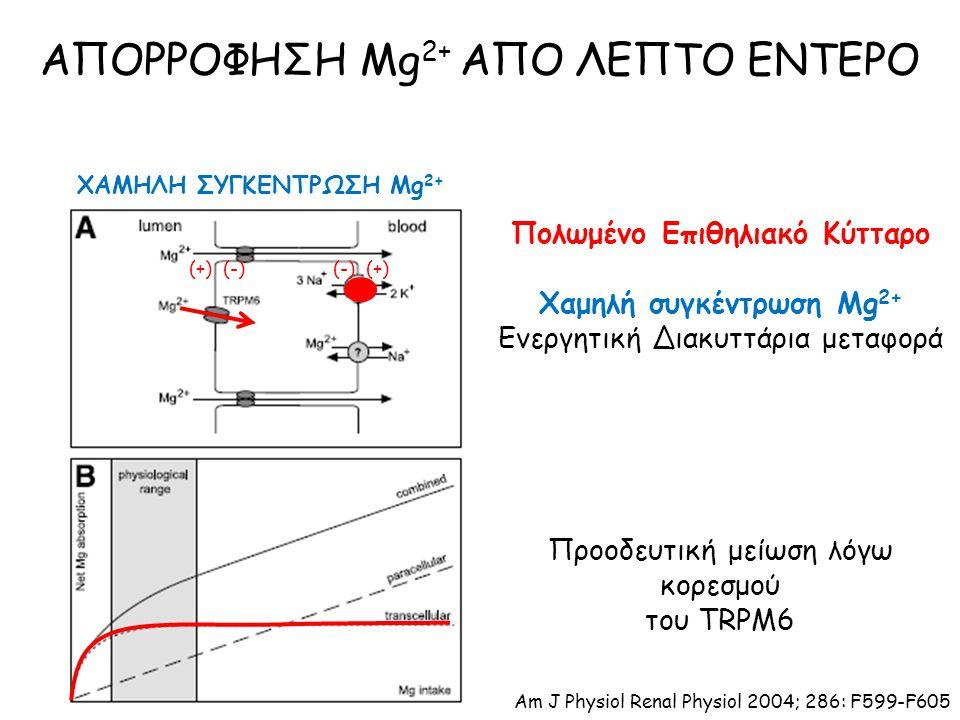 ΑΠΟΡΡΟΦΗΣΗ Mg 2+ ΑΠΟ ΛΕΠΤΟ ΕΝΤΕΡΟ ΧΑΜΗΛΗ ΣΥΓΚΕΝΤΡΩΣΗ Mg 2+ Πολωμένο Επιθηλιακό Κύτταρο Χαμηλή συγκέντρωση Mg 2+ Ενεργητική Διακυττάρια μεταφορά Προοδευτική μείωση λόγω κορεσμού του TRPM6 (+) (-) (-) (+) Am J Physiol Renal Physiol 2004; 286: F599-F605