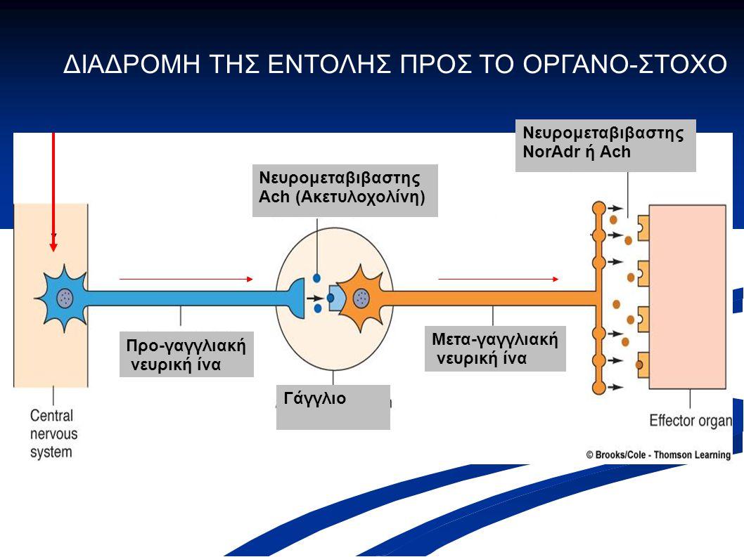 Προ-γαγγλιακή νευρική ίνα Μετα-γαγγλιακή νευρική ίνα Νευρομεταβιβαστης Ach (Ακετυλοχολίνη) Γάγγλιο Νευρομεταβιβαστης NorAdr ή Ach ΔΙΑΔΡΟΜΗ ΤΗΣ ΕΝΤΟΛΗΣ