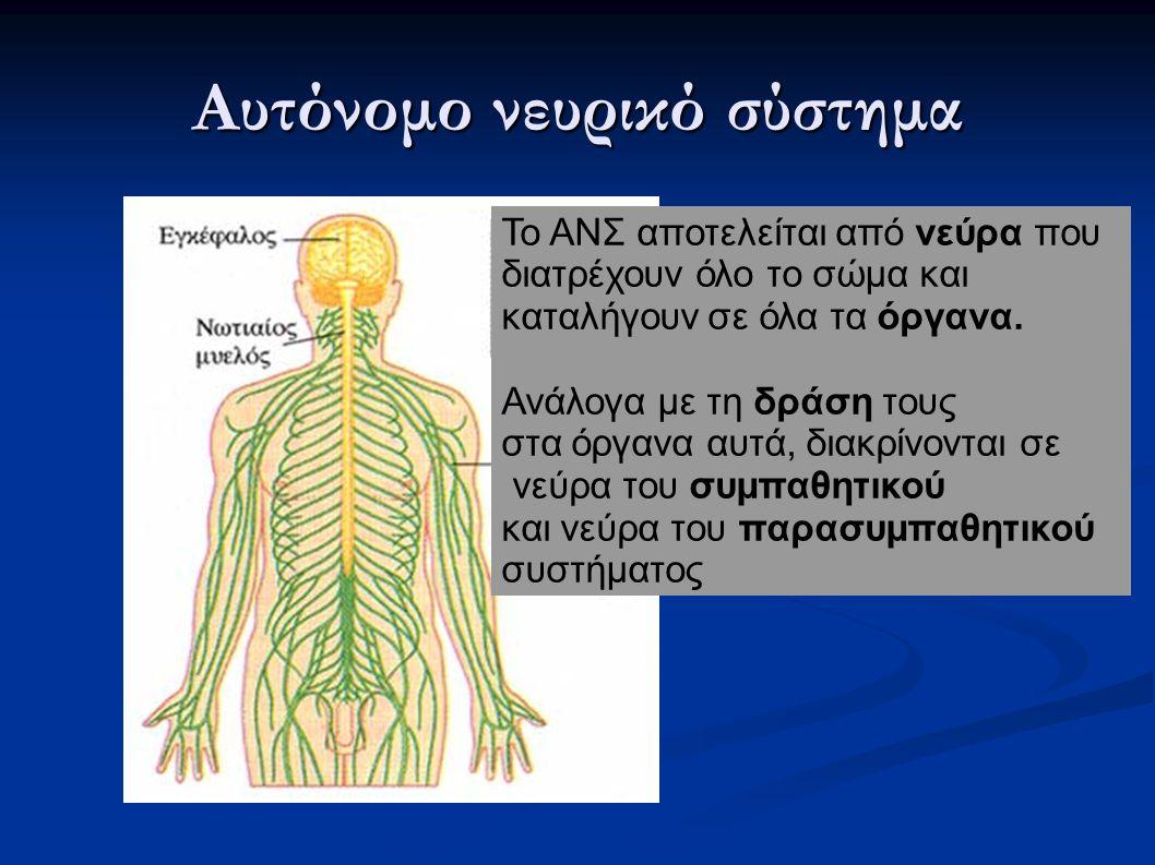 Προ-γαγγλιακή νευρική ίνα Μετα-γαγγλιακή νευρική ίνα Νευρομεταβιβαστης Ach (Ακετυλοχολίνη) Γάγγλιο Νευρομεταβιβαστης NorAdr ή Ach ΔΙΑΔΡΟΜΗ ΤΗΣ ΕΝΤΟΛΗΣ ΠΡΟΣ ΤΟ ΟΡΓΑΝΟ-ΣΤΟΧΟ