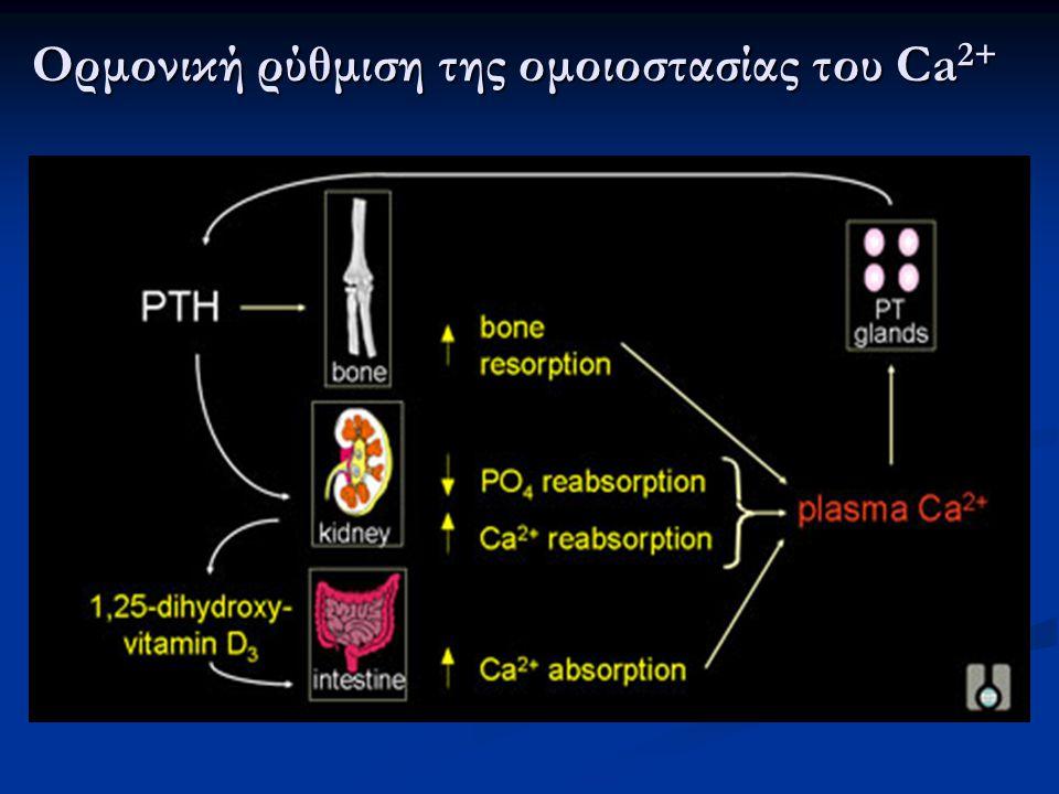 Ορμονική ρύθμιση της ομοιοστασίας του Ca 2+
