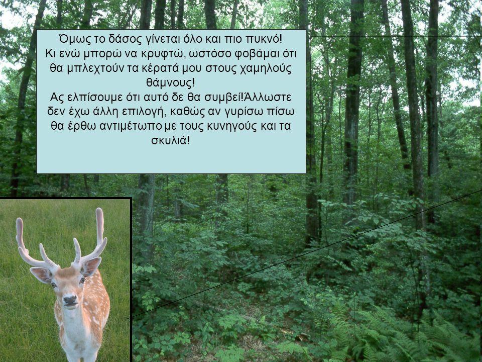 Όμως το δάσος γίνεται όλο και πιο πυκνό! Κι ενώ μπορώ να κρυφτώ, ωστόσο φοβάμαι ότι θα μπλεχτούν τα κέρατά μου στους χαμηλούς θάμνους! Ας ελπίσουμε ότ