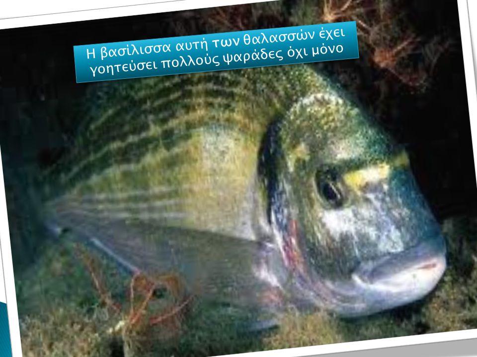 Η μεγάλη κατηγορία των ψαριών περιλαμβάνει 28.000 γνωστά είδη.