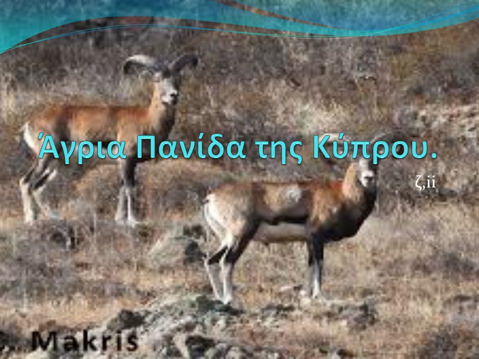 Anas platyrhynchos Βιότοποι : λίμνες, ρυάκια, έλη.