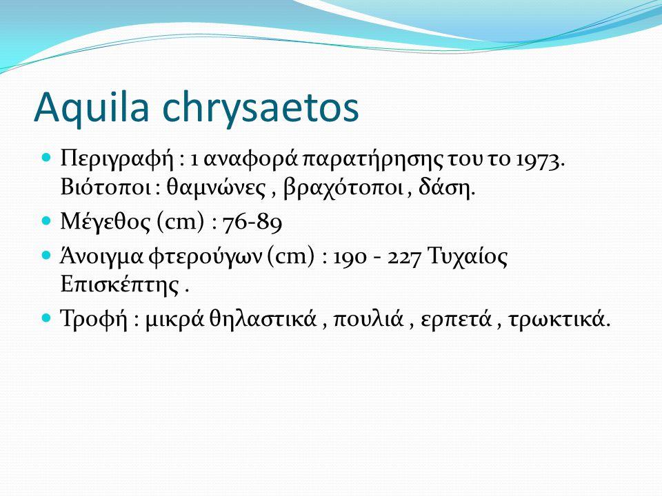Aquila chrysaetos Περιγραφή : 1 αναφορά παρατήρησης του το 1973. Βιότοποι : θαμνώνες, βραχότοποι, δάση. Μέγεθος (cm) : 76-89 Άνοιγμα φτερούγων (cm) :