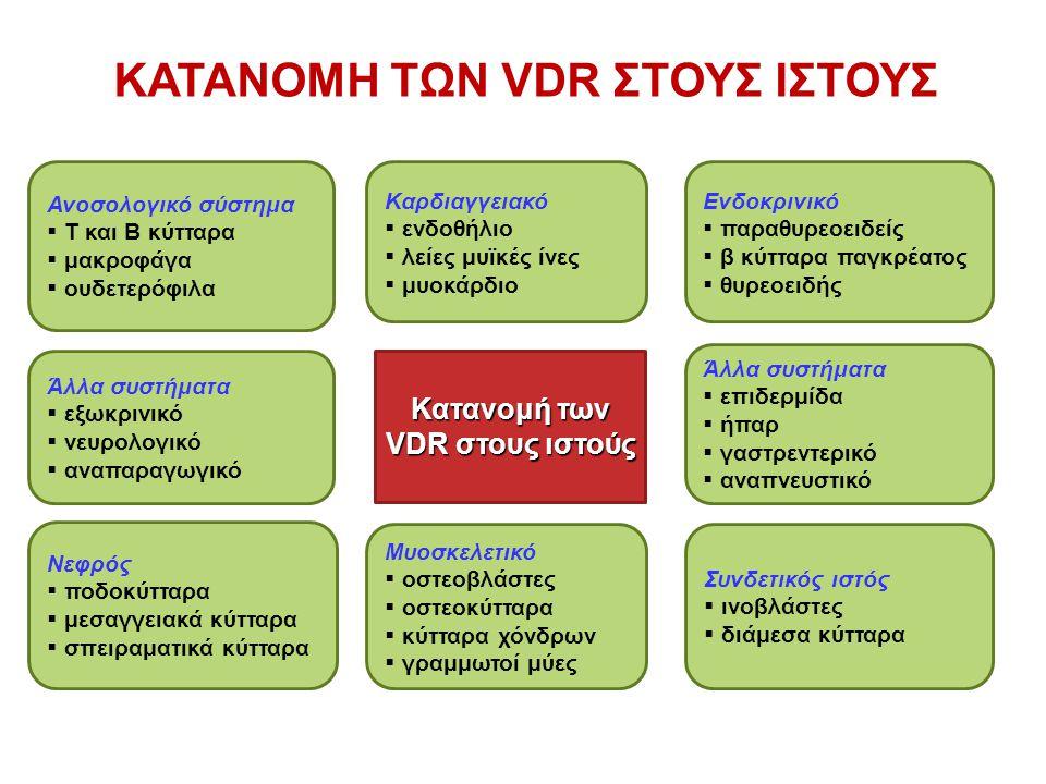 Μυοσκελετικό  οστεοβλάστες  οστεοκύτταρα  κύτταρα χόνδρων  γραμμωτοί μύες Κατανομή των VDR στους ιστούς Καρδιαγγειακό  ενδοθήλιο  λείες μυϊκές ίνες  μυοκάρδιο Ανοσολογικό σύστημα  T και Β κύτταρα  μακροφάγα  ουδετερόφιλα Ενδοκρινικό  παραθυρεοειδείς  β κύτταρα παγκρέατος  θυρεοειδής Νεφρός  ποδοκύτταρα  μεσαγγειακά κύτταρα  σπειραματικά κύτταρα Συνδετικός ιστός  ινοβλάστες  διάμεσα κύτταρα Άλλα συστήματα  εξωκρινικό  νευρολογικό  αναπαραγωγικό Άλλα συστήματα  επιδερμίδα  ήπαρ  γαστρεντερικό  αναπνευστικό ΚΑΤΑΝΟΜΗ ΤΩΝ VDR ΣΤΟΥΣ ΙΣΤΟΥΣ