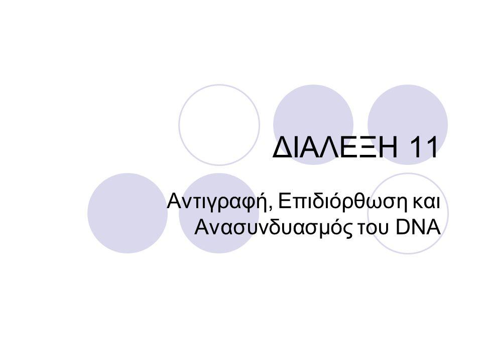 ΕΠΙΔΙΟΡΘΩΣΗ ΑΤΑΙΡΙΑΣΤΩΝ ΒΑΣΕΩΝ DNA Το σύστημα επιδιόρθωσης αταίριαστων βάσεων DNA επιδιορθώνει ένα λάθος ανά 10 9 Ένα σύμπλοκο πρωτεϊνών επιδιόρθωσης αναγνωρίζει τα αταίριαστα ζεύγη νουκλεοτιδίων και την ασυμμετρία στη διπλή έλικα, αφαιρεί το ένα από τους δύο κλώνους και ανασυνθέτει το τμήμα που λείπει