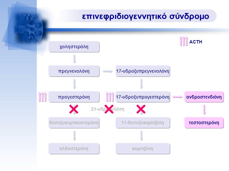 επινεφριδιογεννητικό σύνδρομο χοληστερόλη πρεγνενολόνη 17-υδροξυπρογεστερόνηπρογεστερόνη δεσοξυκορτικοστερόνη11-δεσοξυκορτιζόλη ανδροστενδιόνη κορτιζόνη 17-υδροξυπρεγνενολόνη αλδοστερόνη 21-υδροξυλάση τεστοστερόνη ACTH
