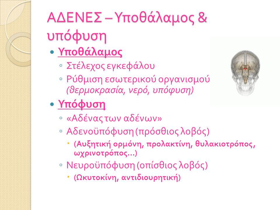 ΑΔΕΝΕΣ – Υποθάλαμος & υπόφυση Υποθάλαμος ◦ Στέλεχος εγκεφάλου ◦ Ρύθμιση εσωτερικού οργανισμού ( θερμοκρασία, νερό, υπόφυση ) Υπόφυση ◦ « Αδένας των αδένων » ◦ Αδενοϋπόφυση ( πρόσθιος λοβός )  ( Αυξητική ορμόνη, προλακτίνη, θυλακιοτρόπος, ωχρινοτρόπος …) ◦ Νευροϋπόφυση ( οπίσθιος λοβός )  ( Ωκυτοκίνη, αντιδιουρητική )