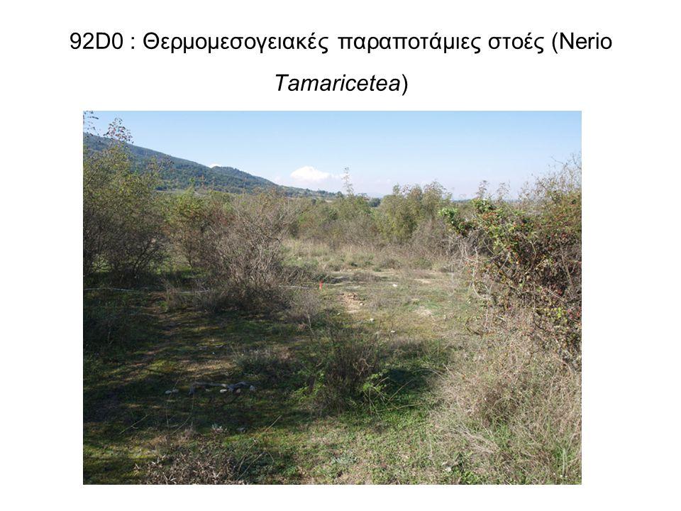 92D0 : Θερμομεσογειακές παραποτάμιες στοές (Nerio Tamaricetea)