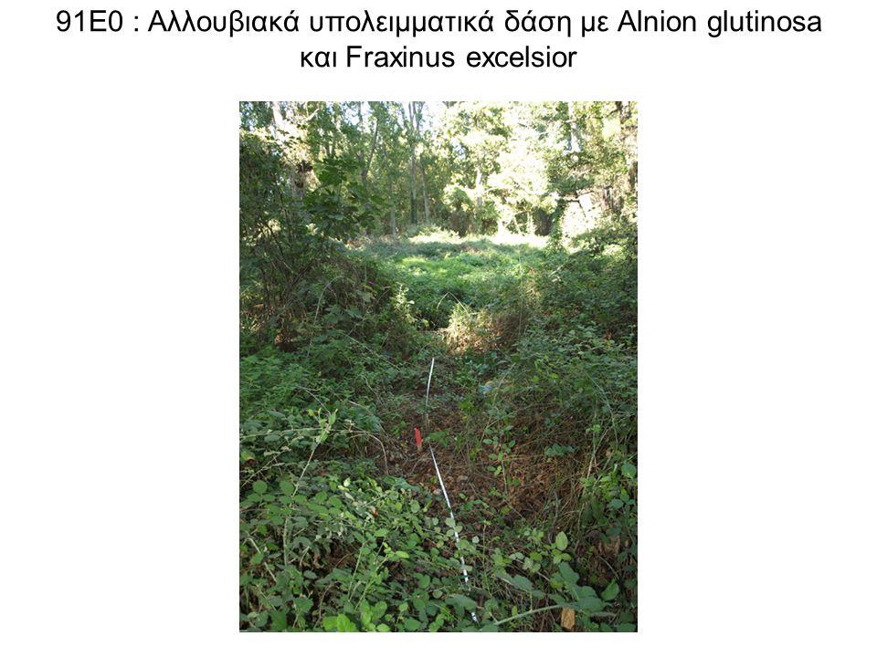 91Ε0 : Αλλουβιακά υπολειμματικά δάση με Alnion glutinosa και Fraxinus excelsior